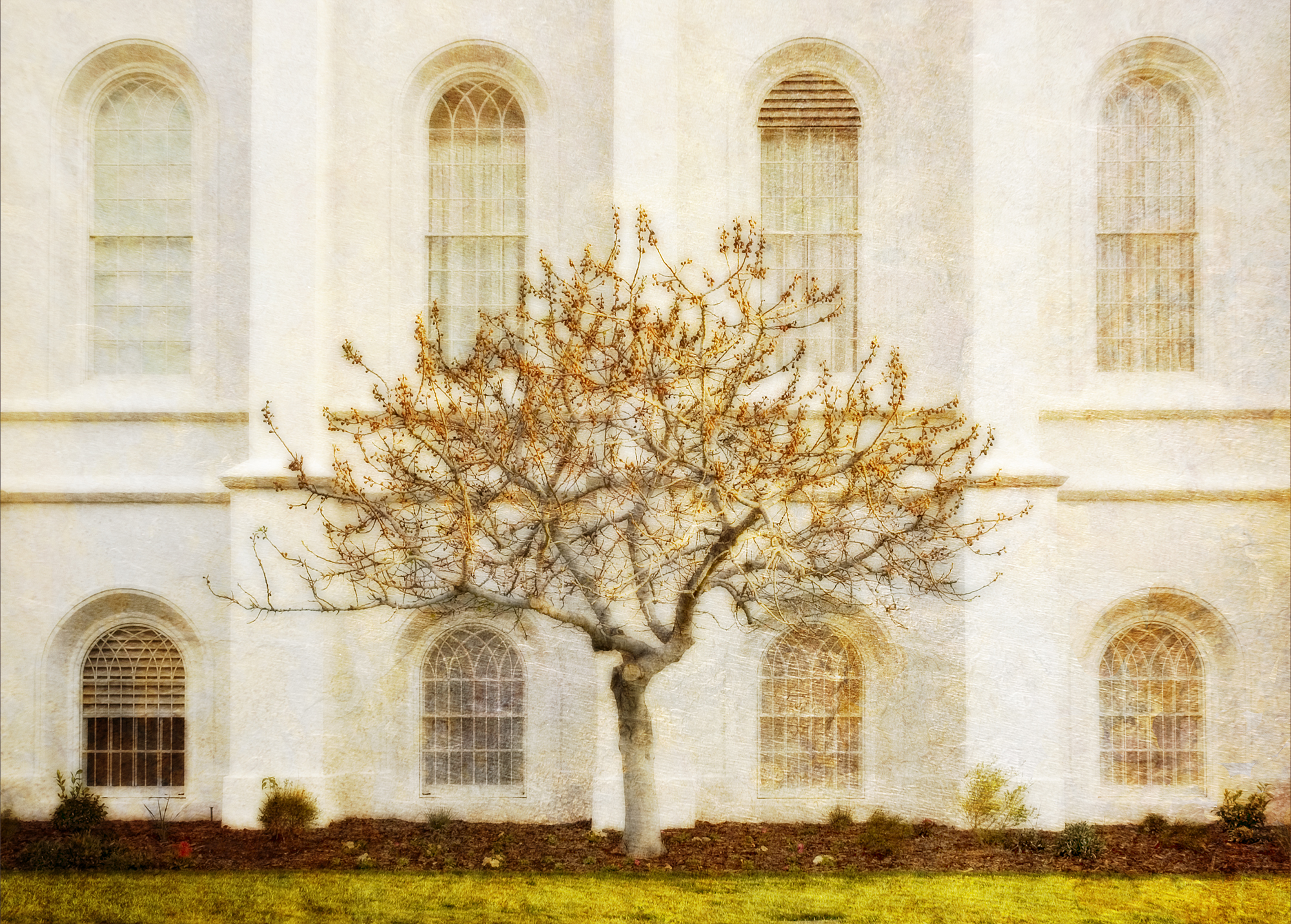 St. George Temple Tree